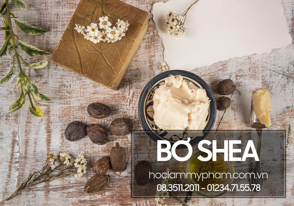 Bơ shea (Shea butter) – Nguyên liệu làm mỹ phẩm