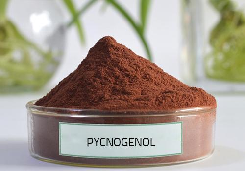 Bột thông đỏ Pycnogenol