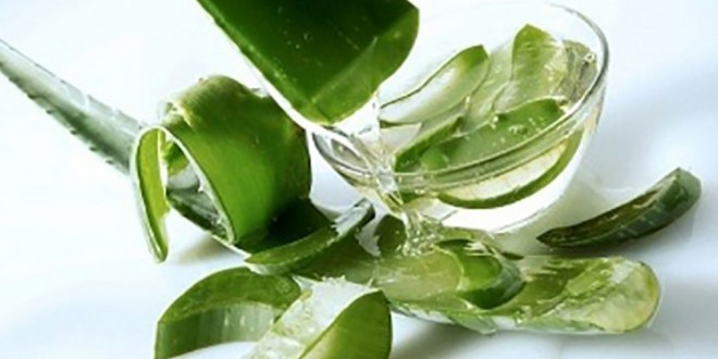 Chiêt xuất lô hội (Nha đam, Aoe extract) nguyên chất
