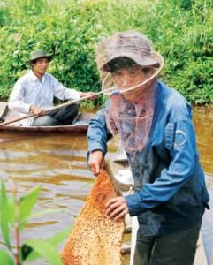 mật ong tràm , mật ong giá sĩ , mật ong rung nguyen chất, mật ong rừng